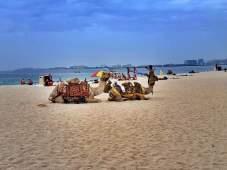 JBR Dubai (3)